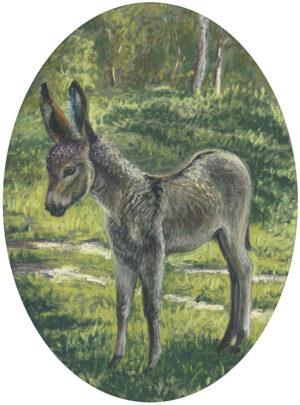 """The Donkey Series: Charlie, Fat Albert, Treacle"""