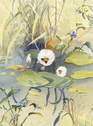 """Flowers of the Wetlands"""